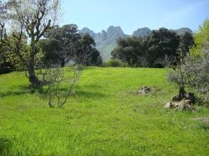 Floresta mediterránea en Túnez.